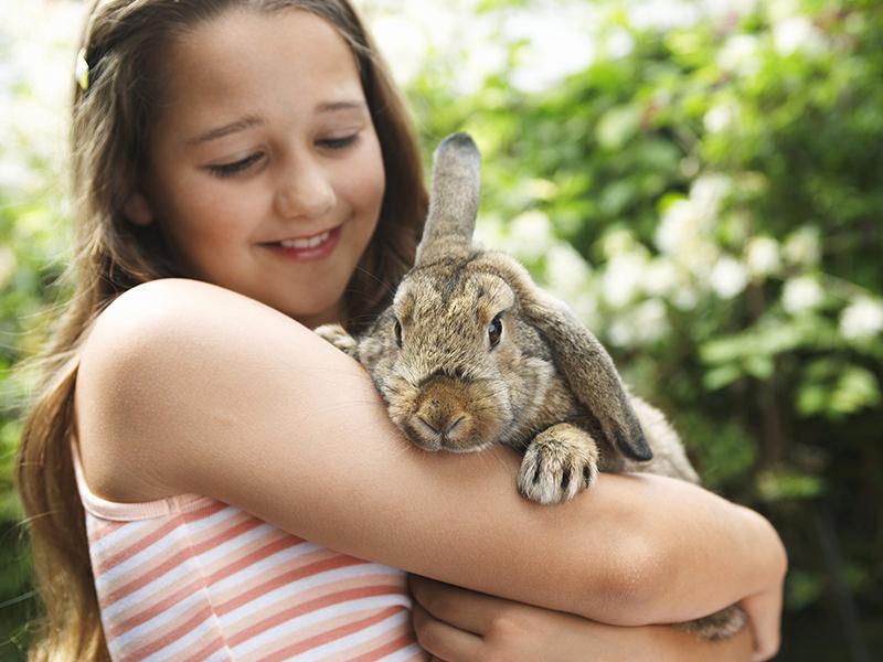cuidado de conejo