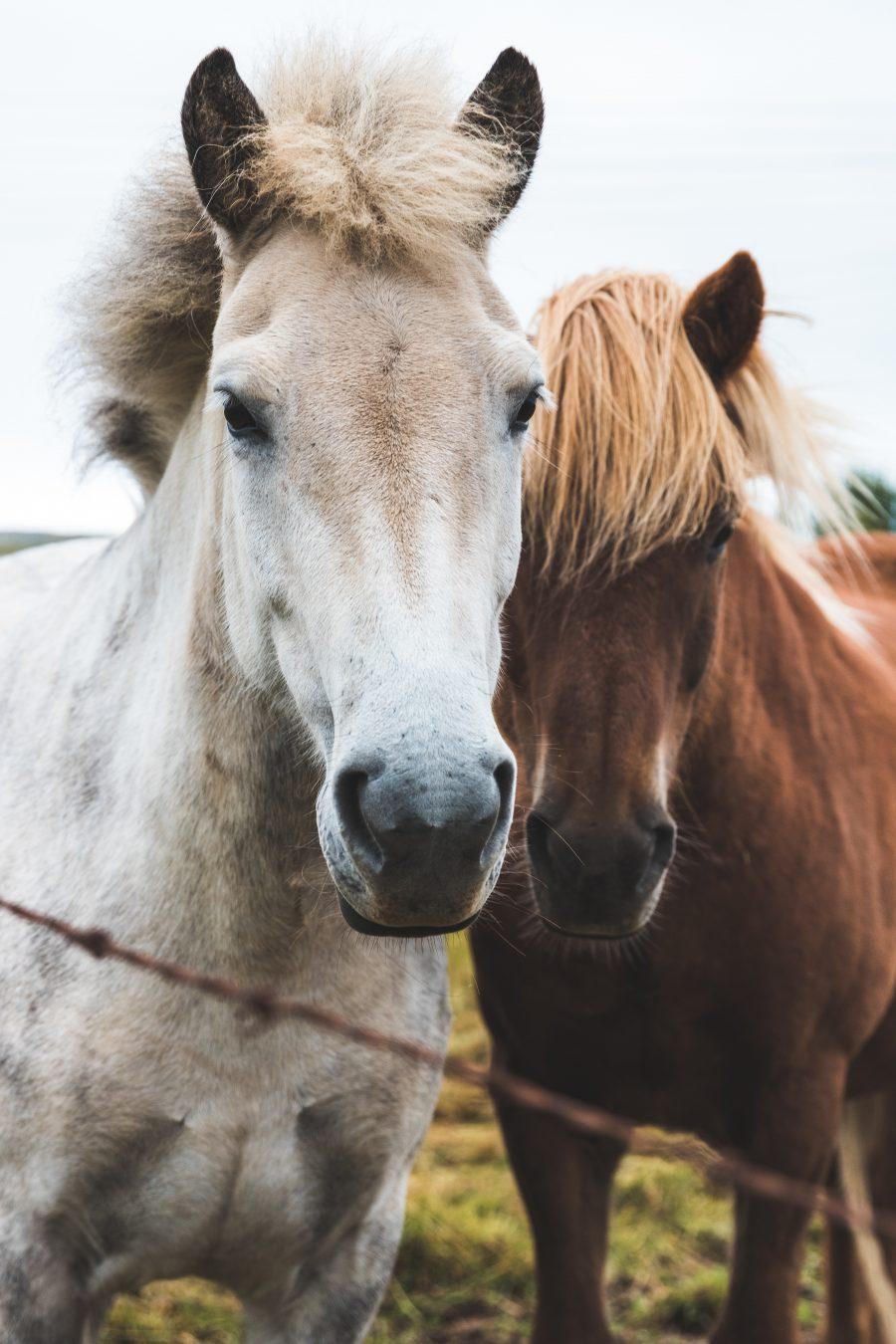 dos caballos corriendo