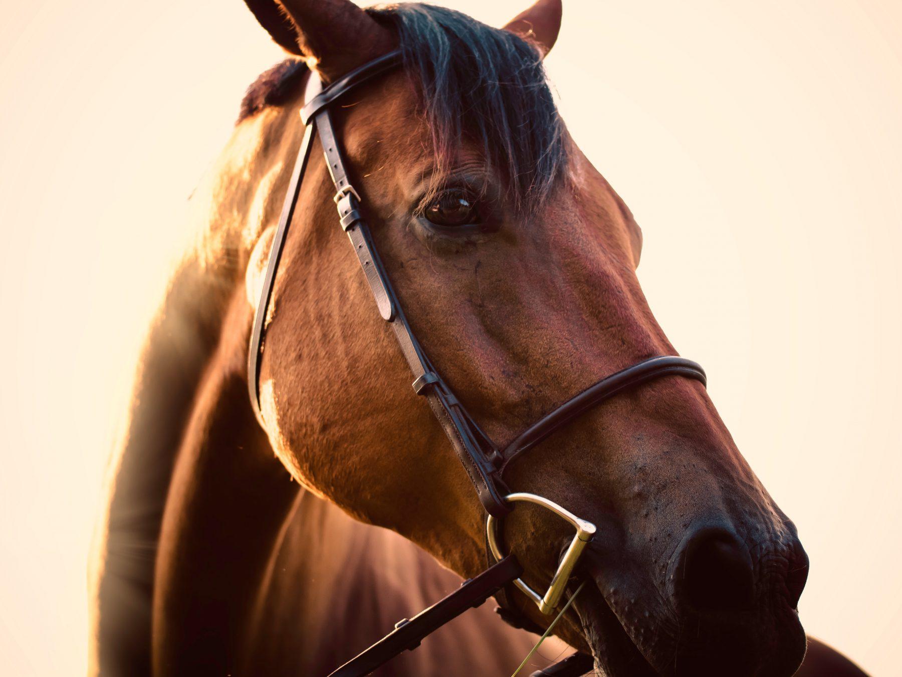 cara de caballo en dia soleado