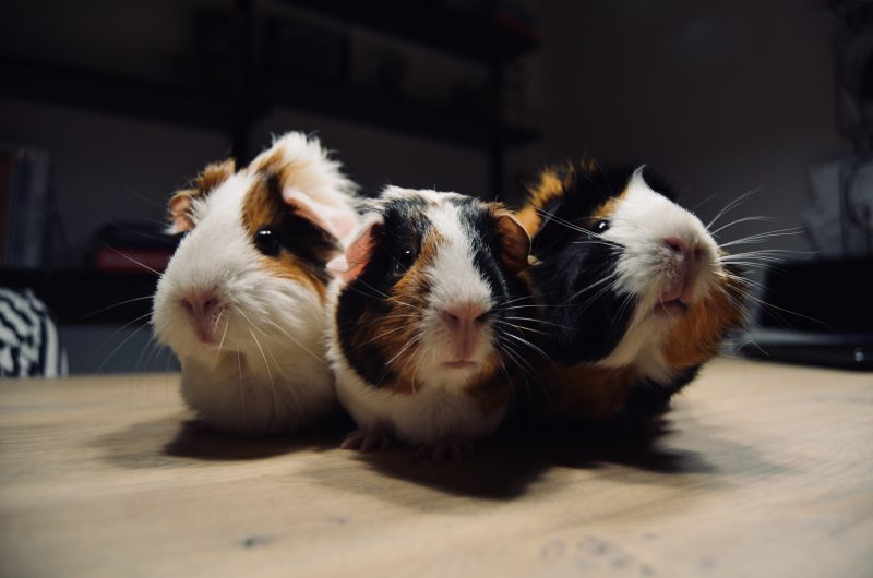 Utilizar CBD en animales | Canna-vets.com