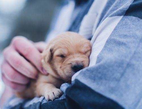 Simposium Natural Healing for Pets Barcelona