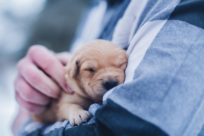 Cuidados veterinarios cachorros
