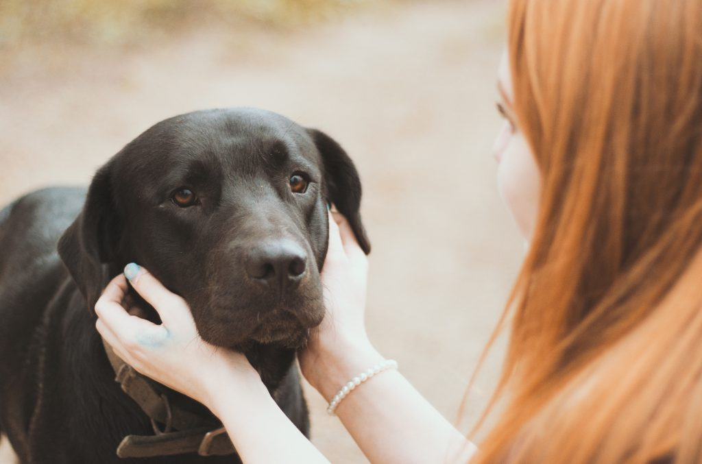 treating with CBD | canna-vets.com