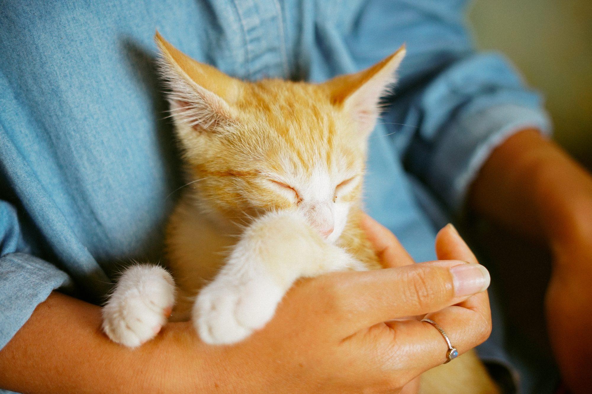manki-kim-unsplash-cat